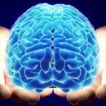 LA EDAD EN LA QUE LA QUE LA INTELIGENCIA HUMANA TOCA SU MÁXIMO PICO | Otro interrogante de la Ciencia