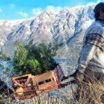 ARGENTINA | Jóvenes plantaron 11.500 árboles para recuperar un bosque incendiado en la Patagonia